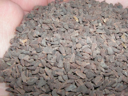 Handful of viable Syrian Rue seeds by Coaster420~commonswiki: https://commons.wikimedia.org/wiki/File:Syrian_Rue_Seeds.jpg